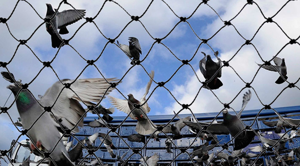 Birds Protection Nets Dealers